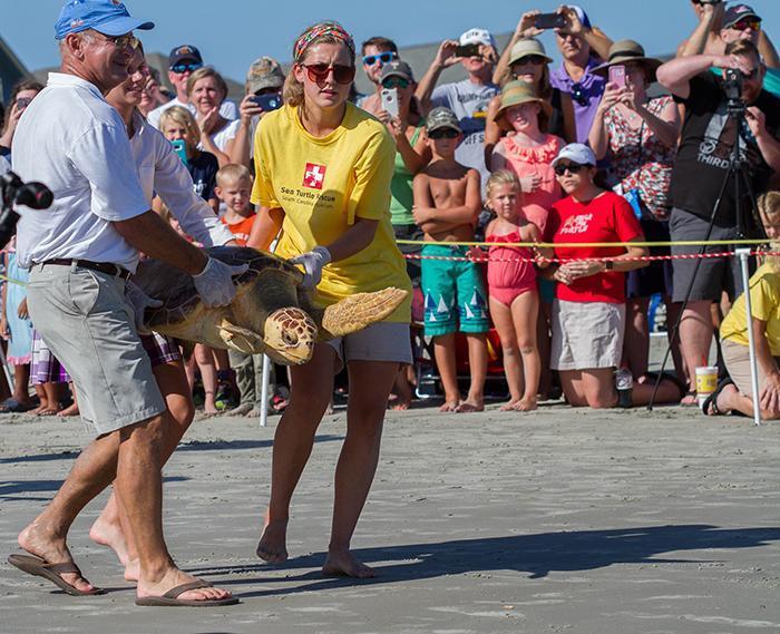 photographer jack rogers South Carolina Aquarium staff carry a rehabbed Sea Turtle back to the ocean